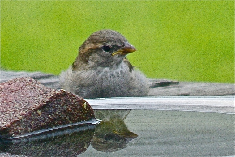 Birdbaths sometimes work as reflecting pools, too. :-)