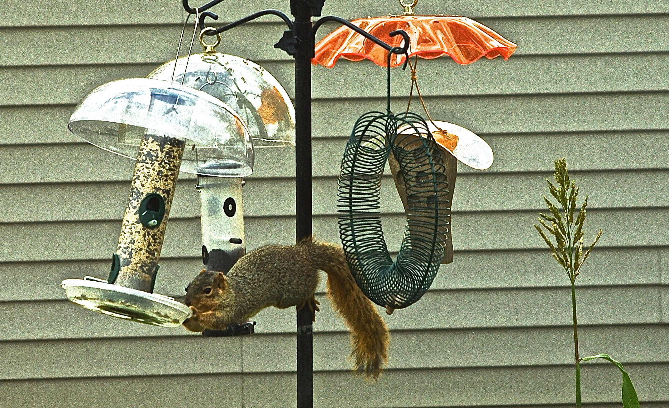 audubon off cc tony credit bird ground choosing flickr photo feeder a york alter keep new squirrels conservation