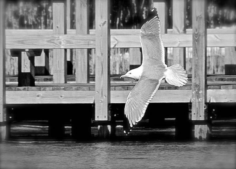 83/365  Gull out at the reservation