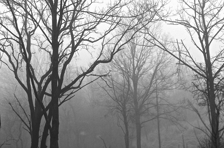 92/365  Foggy morning in a mountain forest.